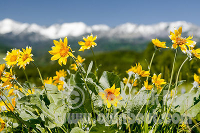 Mountain Flower View