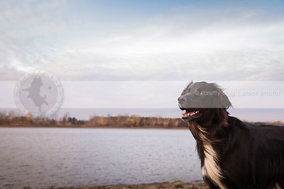 portrait of happy windblown dog at lake under sky