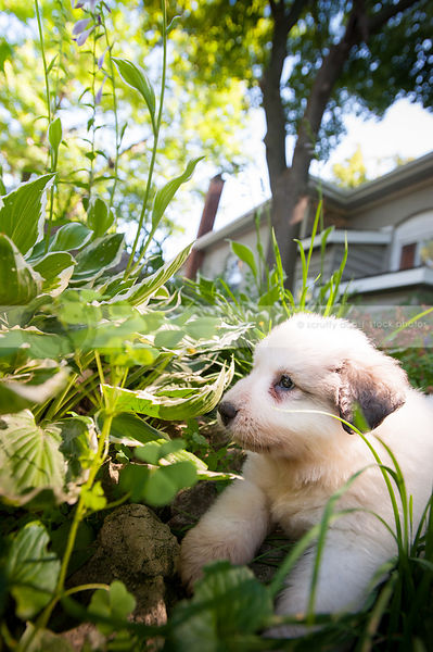 cute little white puppy dog hiding in garden at house