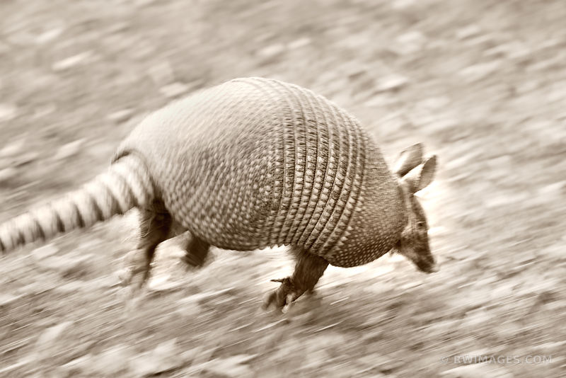 ARMADILLO ESCAPE