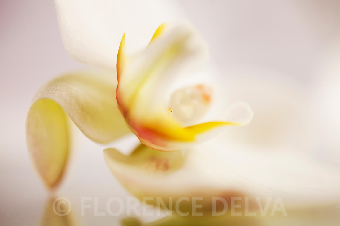 Orchid-0015