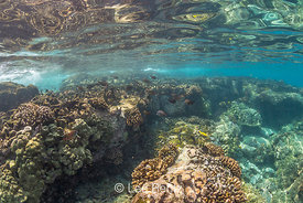 Coral Reef Reflections up on Surface on Big Island of Hawaii