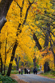 Fall Colors in Bidwell Park, Chico #10