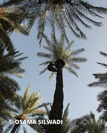 Palm Tree Harvest photos