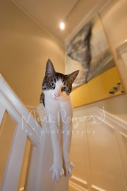 Domestic shorthair cat with nonchalant expression on stair rail