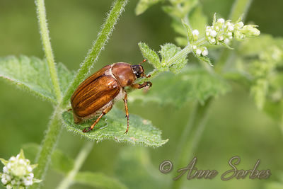 Other Insects of my wet meadow. Nouvelle-Aquitaine, France. photos
