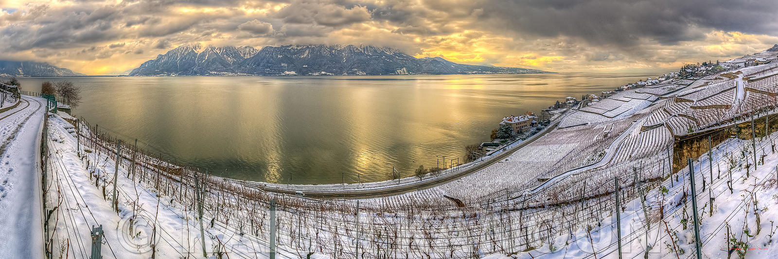 Panorama - Snowy white vineyards with the Alps and Leman lake