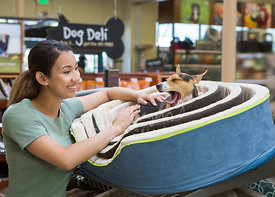 Young Woman Smiling at Sleepy Dog on Dog Bed in a Pet Store