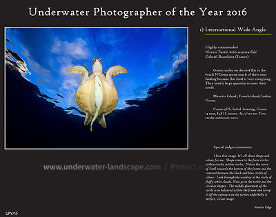 Underwater Photographer of the Years 2016 Les plongées à La Réunion