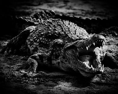 Open the mouth, Tanzania 2002 © Laurent Baheux