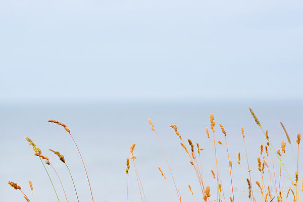 BEACH GRASSES ATLANTIC OCEAN LONG ISLAND