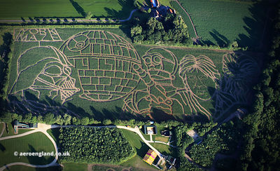 York Maze , the UK's larges Maize Maze.