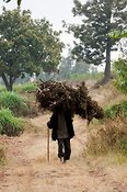 Man carrying firewood on his head. Rwanda