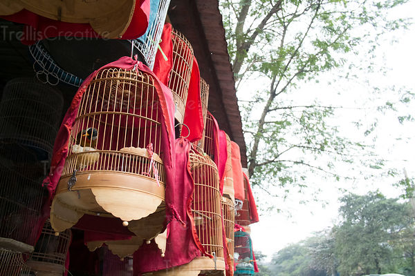 Birdcages hanging in shop at Hanoi