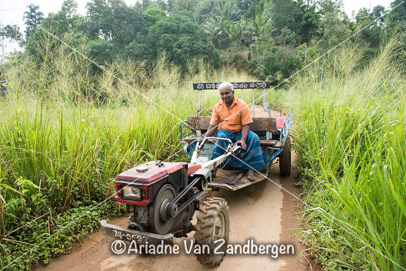 Farmer driving his tractor, Deniyaya, Sri Lanka