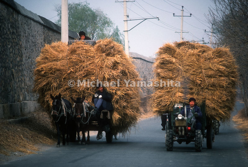 Men transport hay in China.