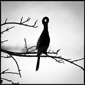 8122-Bird_Laurent_Baheux.jpg