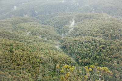 Aerial View of Dense Forest Trees with Wispy Clouds