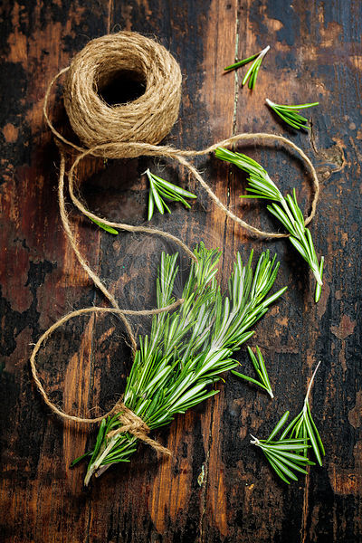 Bunch of fresh rosemary