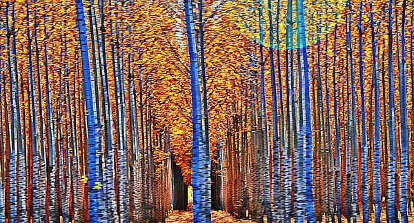 Boardman Poplar trees