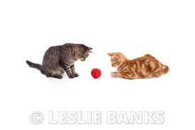 Two Cats Playing