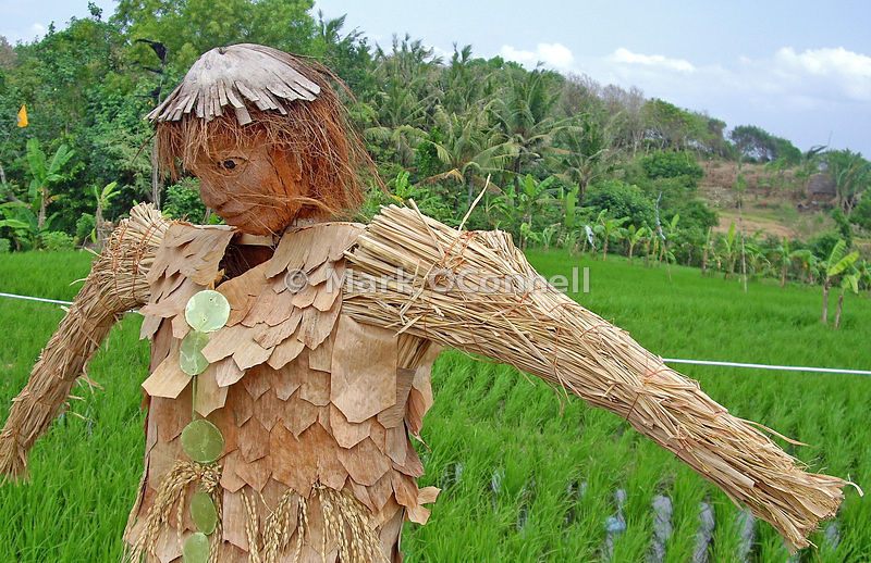 Scarecrow in the rice fields