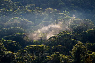 Foggy forest in the Las Nubes Reserve, Costa Rica