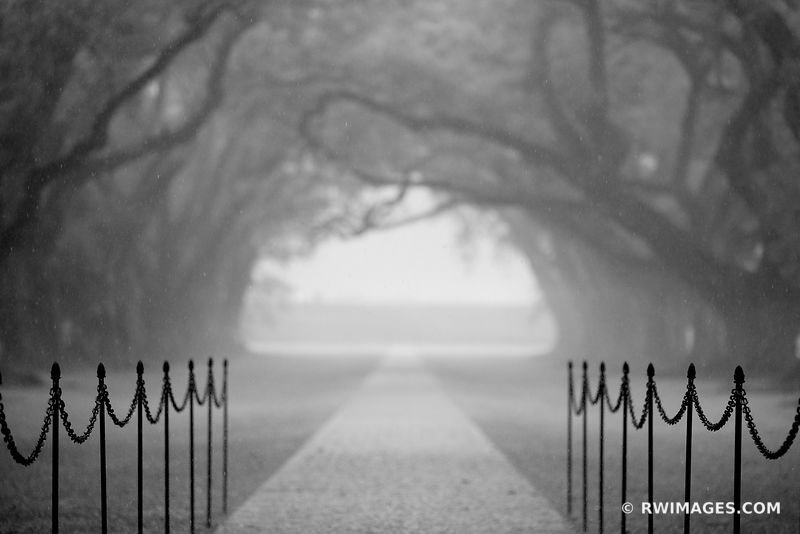 RAINY DAY OAK ALLEY PLANTATION VACHERIE LOUISIANA BLACK AND WHITE
