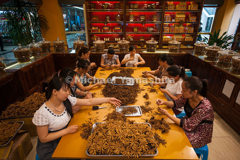 30yr old Zhongshi Caterpillar Fungus Firm, biggest in Chengdu w. 24branches in major cities across China. Pres Mr Zhong Shuangquan. Pics of Chengdu Chinese Herbal Medecine wholesale market. Most expensive YG is 360,000Y/kg for1200 worms. Worms from Nakchu area, TAR. Xray used to catch fakes or weighted w needles. They do sell other meds but 80% of income from YG. Also pics of downtown branch. Women shoppers spend 40,000Y.