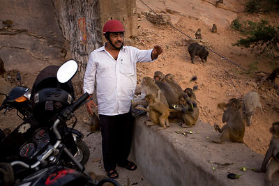 India - Rajasthan - A man feed the monkeys on the path up the mountainside at Galta and the Surya Mandir (known as the Monkey Temple)