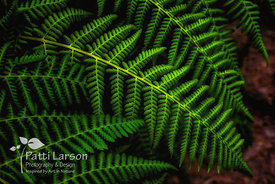 Fern Up Close