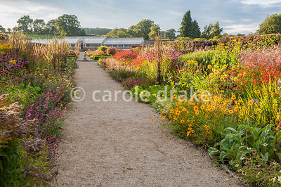 Double herbaceous borders planted with predominantly hot colours leading toward restored Victorian glasshouses. Plants include Coreopsis 'Astolat', crocosmias, dahlias, Persicaria amplexicaulis 'Atrosanguinea', Oenothera macrocarpa, Echinacea purpurea Bressingham hybrids, Verbascum olympicum and tall yellow Rudbeckia laciniata 'Juligold'. Helmsley Walled Garden, Helmsley, York, North Yorkshire, UK