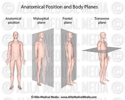 General Anatomy images
