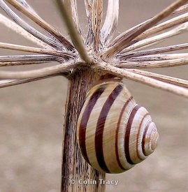 Snail and Stalk