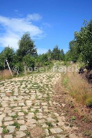 Paved road, Broumov Walls, Czech Republic