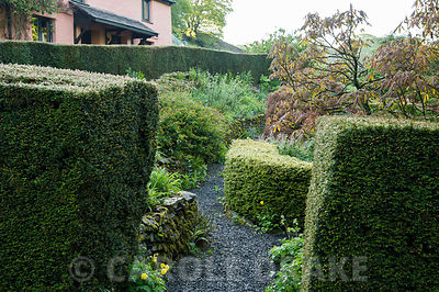 The 'best' garden at the front of the house is the most formal area of the garden, with clipped hedges of yew and box framing a mix of herbaceous plants and shrubs including Aesculus pavia 'Rosea Nana'. Windy Hall, Windermere, Cumbria, UK