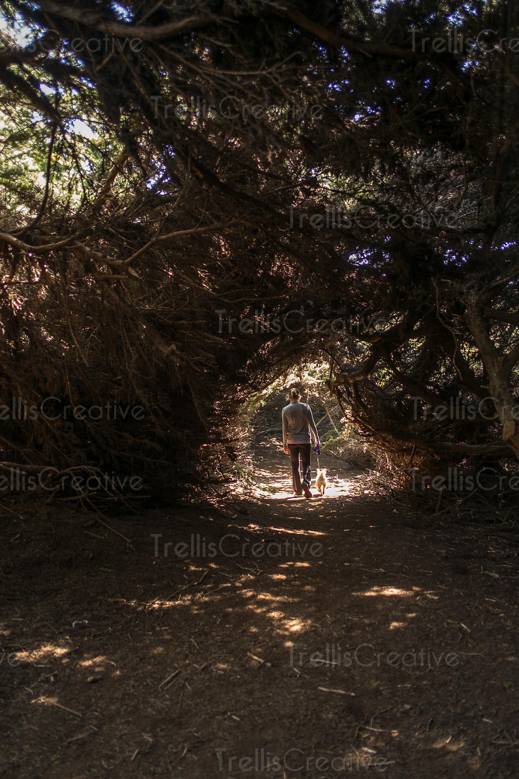 Rear view of a woman walking with her dog through a tree tunnel