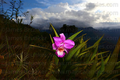 Orchids photographs