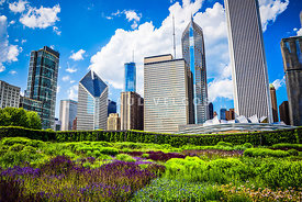 Picture of Lurie Garden Flowers with Chicago Skyline