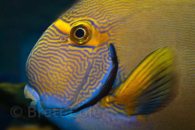 Brett Cole Photography Two Oceans Aquarium Photo Gallery