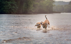 Fetch in the Potomac