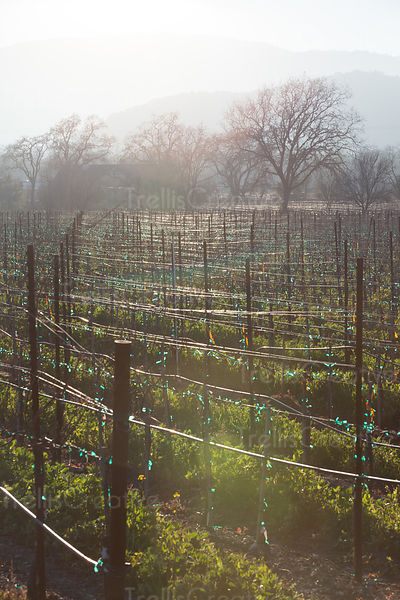 Vines & Vineyard Landscapes photos