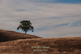 Lone Tree, Sierra Road, San Jose, CA, USA
