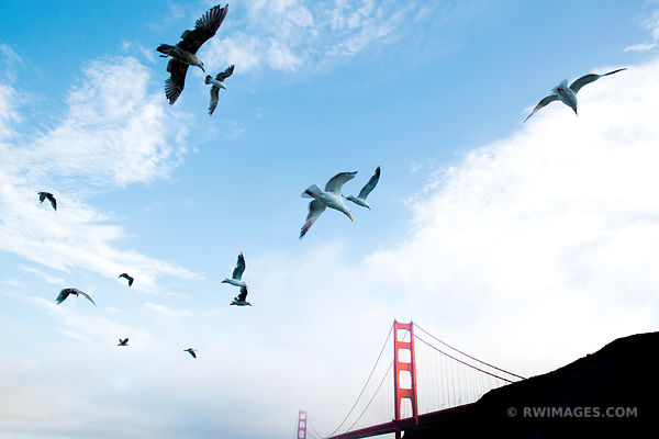SEAGULLS SUNSET GOLDEN GATE BRIDGE SAN FRANCISCO