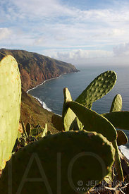 Cactus above cliff and sea