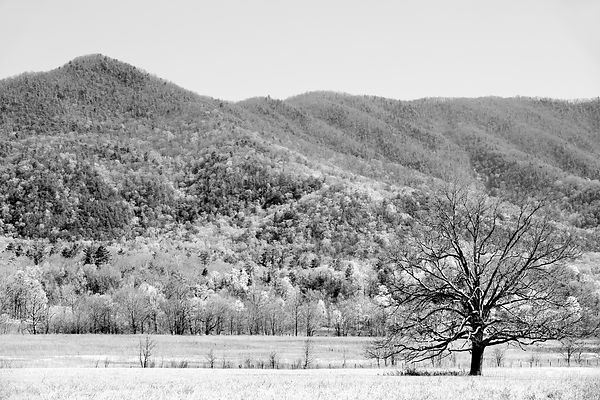 CADES COVE SMOKY MOUNTAINS SPRING BLACK AND WHITE