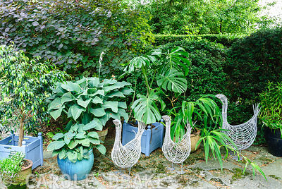 Decorative wire birds amongst pots of foliage plants including hostas, cheese plant and ficus. Beggars Knoll, Newtown, Westbury, Wiltshire, UK