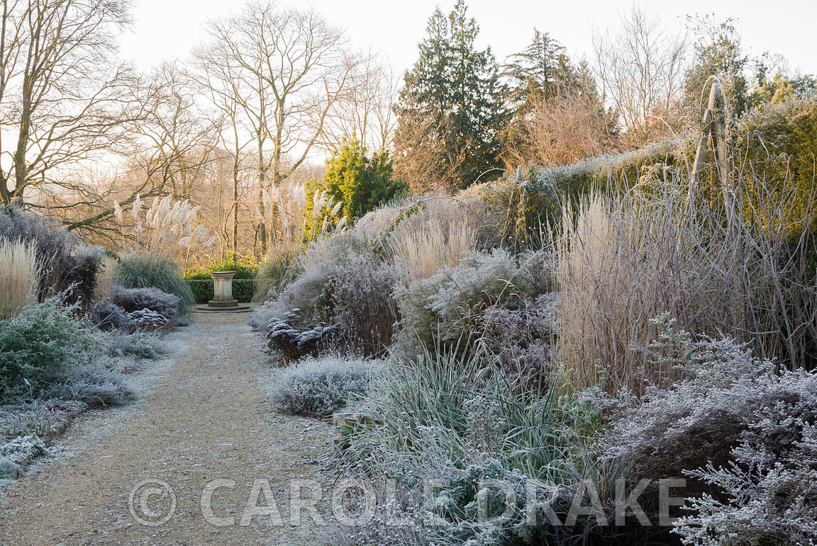 Double herbaceous borders on a frosty morning with strong verticals of Calamagrostis 'Karl Foerster' showing a warm buff. Kingston Maurward Gardens, Dorchester. Dorset, UK