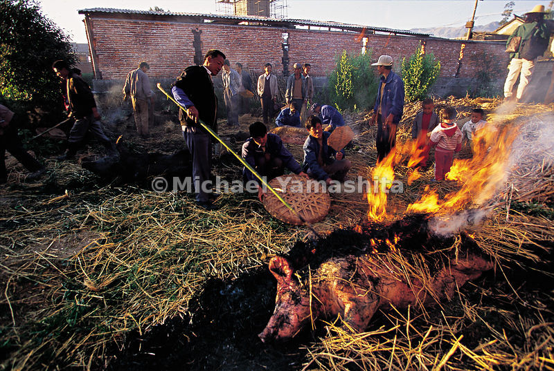 Preparation of a wedding banquet in the village of Shazun, Yunnan. The pig is placed on the fire to burn off the bristles, then eaten raw.