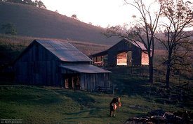 Two horse and barn at sun set, VA